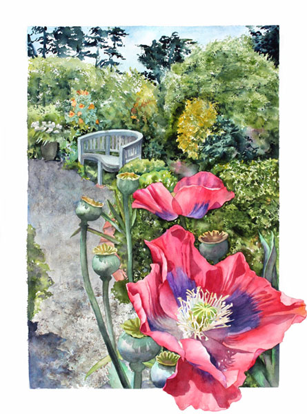 Sally Robertson watercolor of Opium Poppies